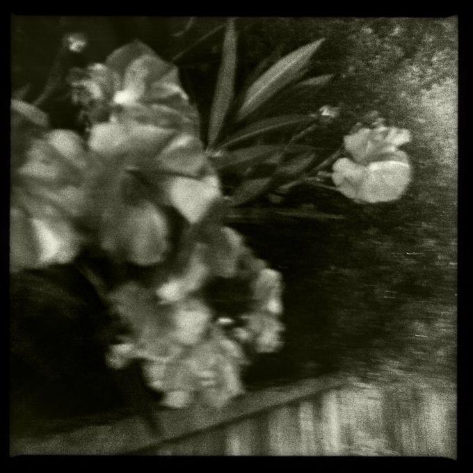 dark flowers 2